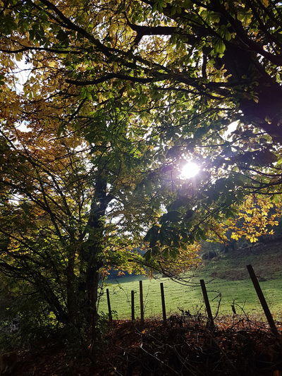 Helsby Hill Nature Growth Tree Low Angle View Beauty In Nature No People Outdoors Sun Sky Day Horizontal