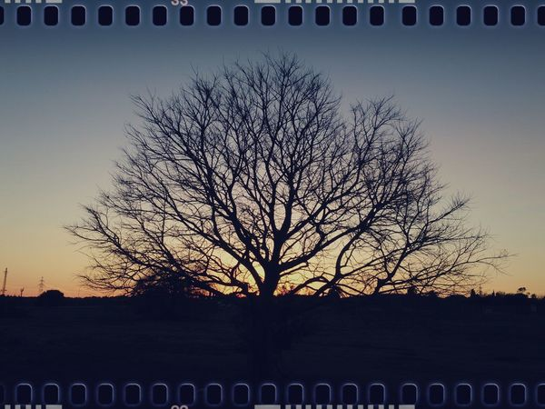 Unexpected sunset epiphany. Mobilephotography Xperiagraphy No People Outdoors Pixlr Lumiocam Country Life Visual Poetry Nature Sunset TreePorn Silhouette Beauty In Nature