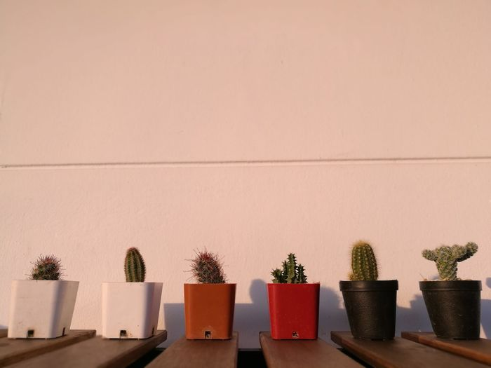 Cacti in a row