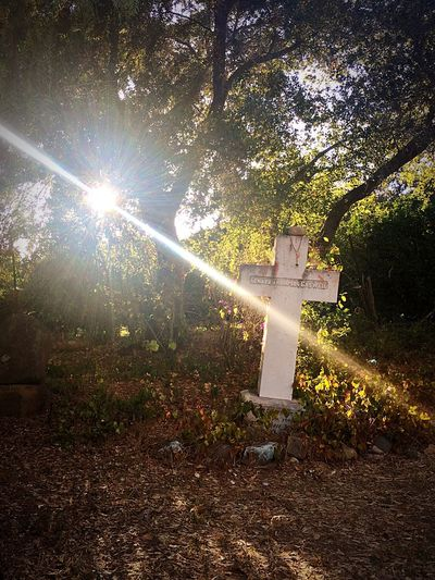 Cemetery walking Sunbeam Sunlight Lens Flare Tranquil Scene Cemetery Photography Gravestone Graveyard Outdoors Spiritual Cross Overgrown Fall Light Peaceful Surrounded By Nature Growth Sun Beauty In Nature Scenics Tranquility Streaming