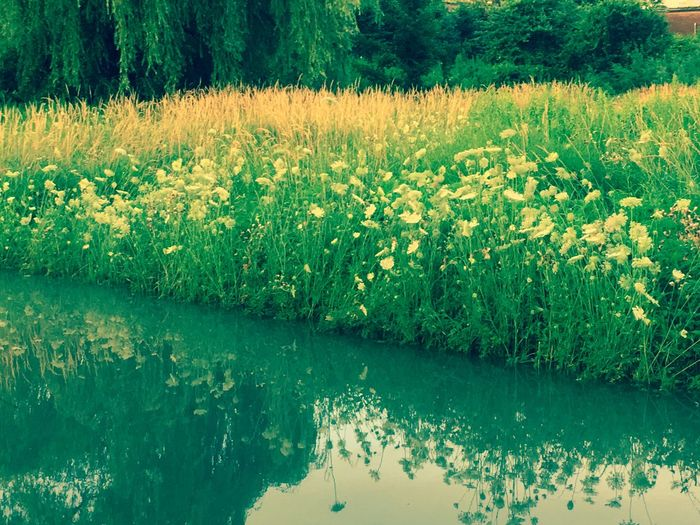 Nature Beauty In Nature Reflection Flower Water Plant Outdoors Day Growth Scenics Tranquility Tranquil Scene No People Tree Green Color Landscape Freshness Grass