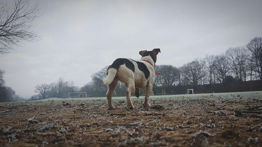 Rear view of dog on field in winter