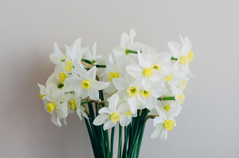 Close-up of white flowers in vase