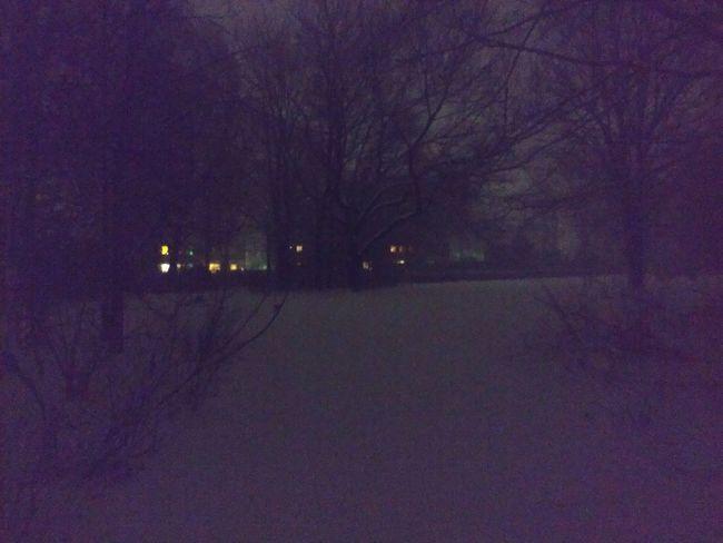 Night Cold Temperature Illuminated Winter Snow Outdoors Land Vehicle No People Tree Nature