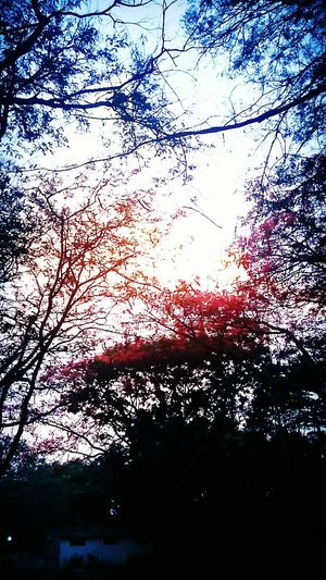 Nature Beauty In Nature Trees And Leaves Colors Of Nature Cold Wheather Rainbow