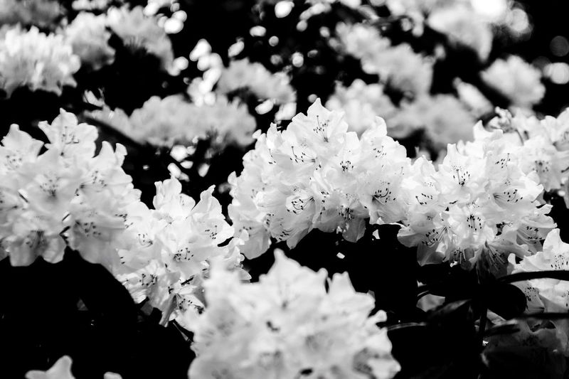 Black And White Friday Flower Beauty In Nature Nature Fragility Growth Blooming Freshness No People Outdoors Day Flower Head Close-up