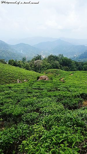 Peace, serenity, love amidst nature ... Lovestory Travel Photography Traveller_india Shutterbug_travels Shutterlicious Melancholic Landscapes Tea Plantations Clickogram India_gram India Travel Diaries