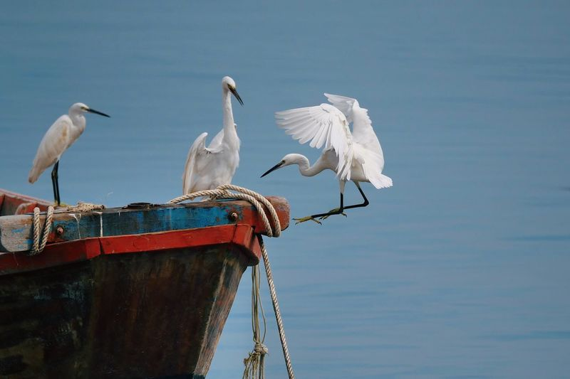 White storks perching on boat in lake