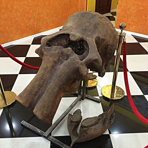 Yakutsk мамонт экспонат интересно