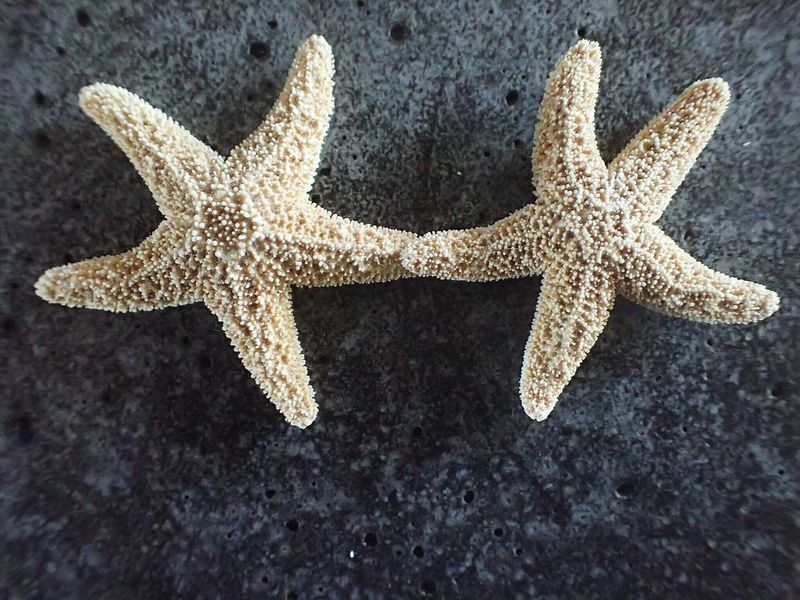 Two Is Better Than One Not A Mirror Starfish  Starfishholdinghands Check This Out Macro Photography Random Photography Nature Is Art Macro StarfishBeSoCute