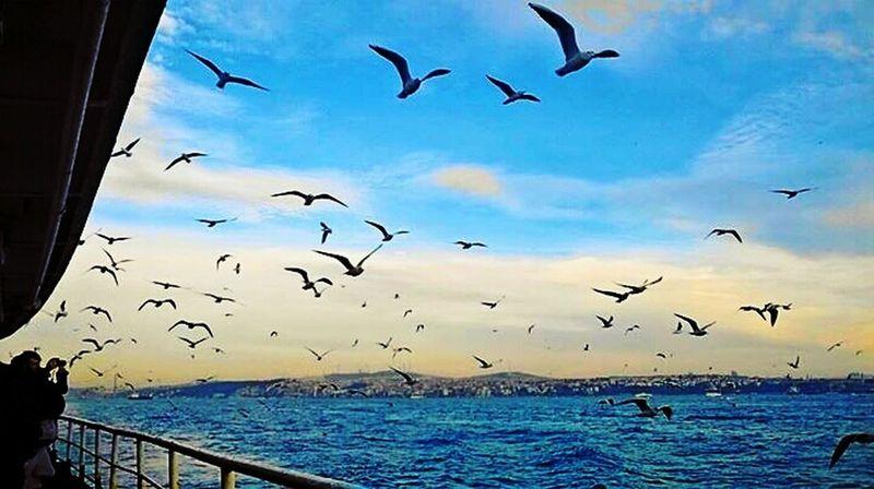 eğer savaş kaybedilmişse,bu benim umrumda bile değil.. Nature Photography Steamship Seagulls Landscape Landscape_Collection