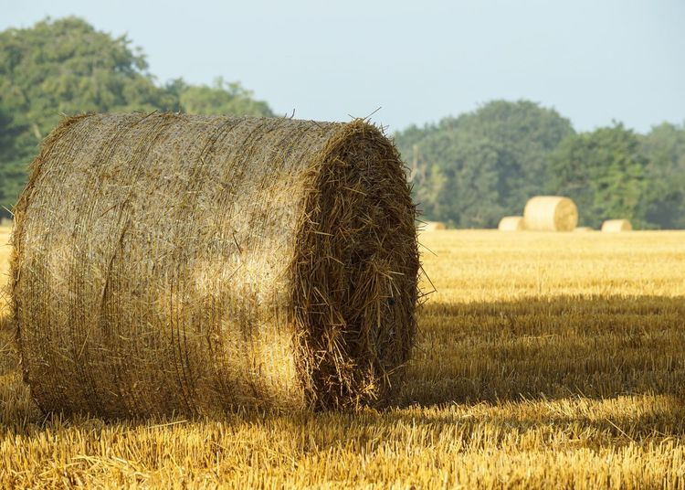 43 Golden Moments Plumley Depth Of Field Summer Tranquil Hay Bales Farming Rural Rural Scene Agriculture Field