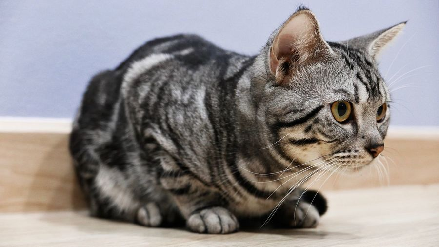 Cat crouched on