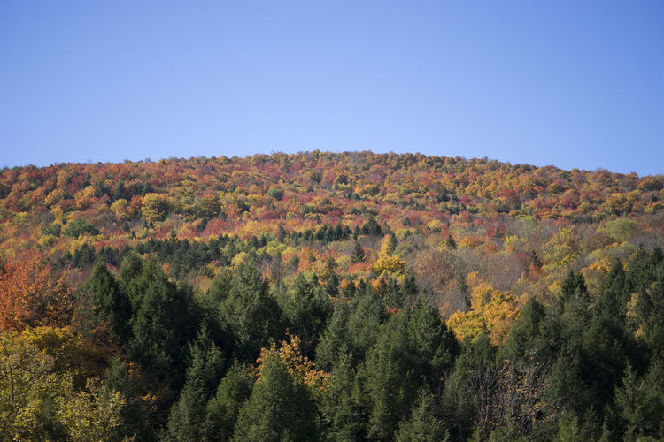 Fall Foliage in Upstate New York Autumn Autumn Colors Beauty In Nature Blue Clear Sky Colors Copy Space Day Fall Foliage Growth Idyllic Landscape Mountain Nature No People Non-urban Scene Outdoors Plant Remote Scenics Sunlight Tranquil Scene Tranquility Tree