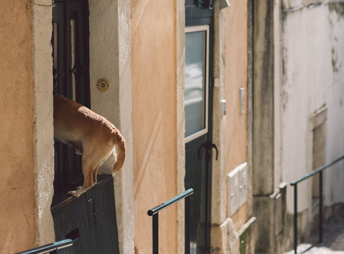 Dog looking through building window