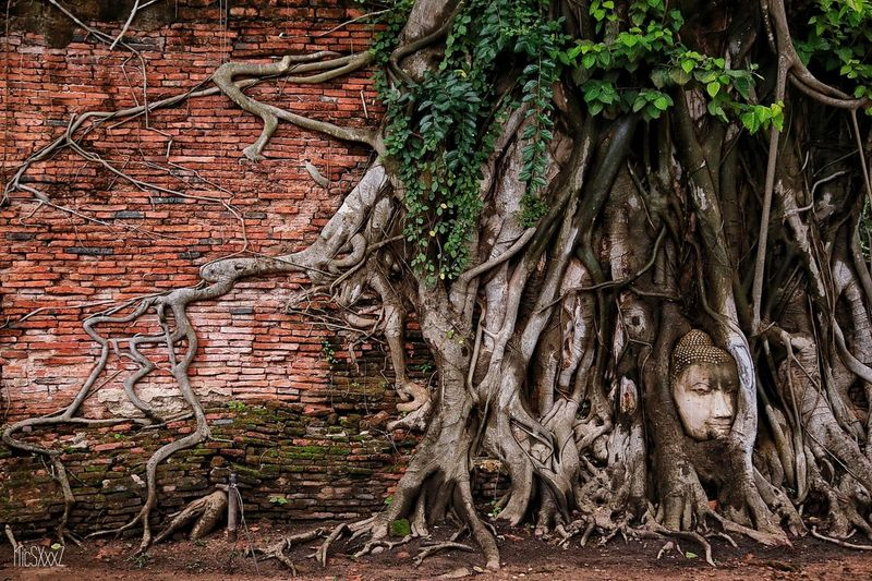 Unseen in Thailand. Root Architecture Branch Tree Nature Streetphotography Thailand Thai Thailand_allshots All_shots Outdoors History Temple Thailand Travel
