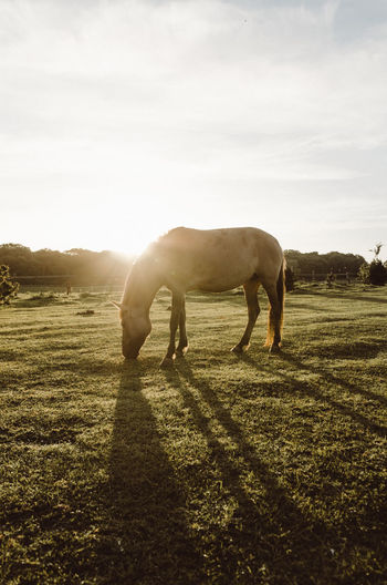 Sunrise Animal Themes Beauty In Nature Day Domestic Animals Field Full Length Grass Grazing Horse Landscape Livestock Mammal Nature No People One Animal Outdoors Sky Standing Sunlight Tranquility Tree
