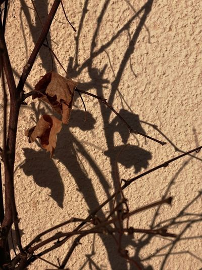 High angle view of a shadow of plant on wall