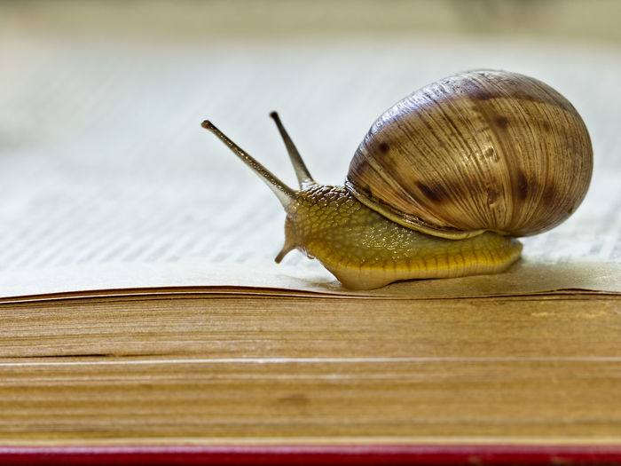 Close-up of snail on book