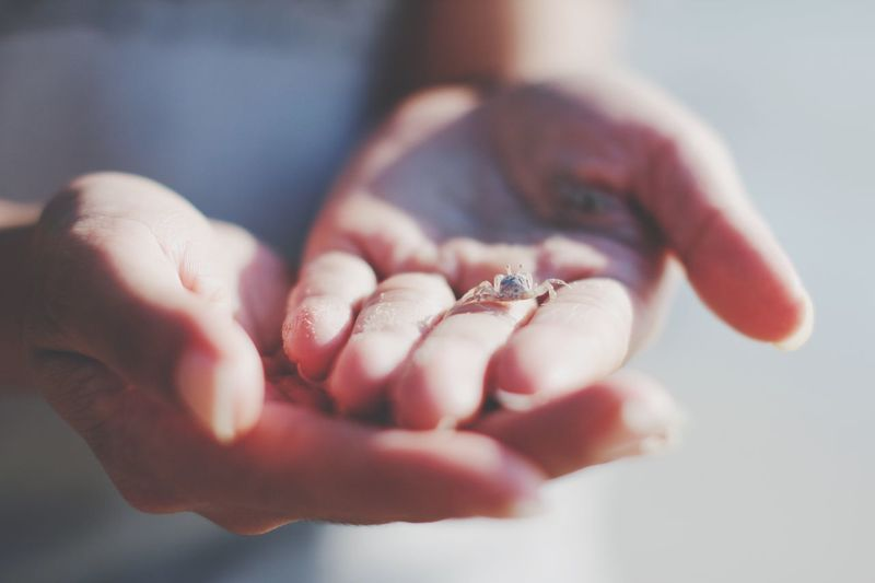 Close-up of hands holding crab