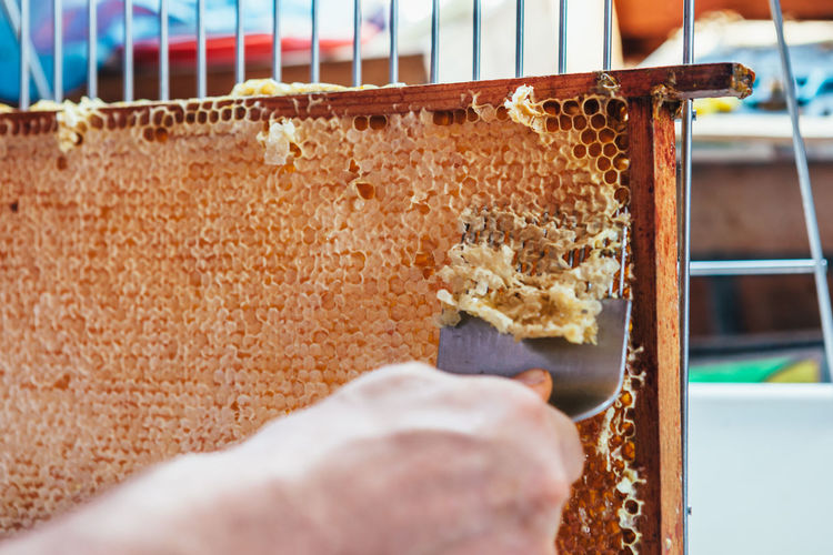 Close-up of man harvesting honey from beehive