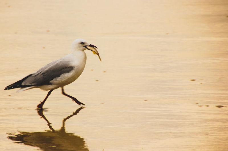 Close-Up Of Bird Perching On Beach
