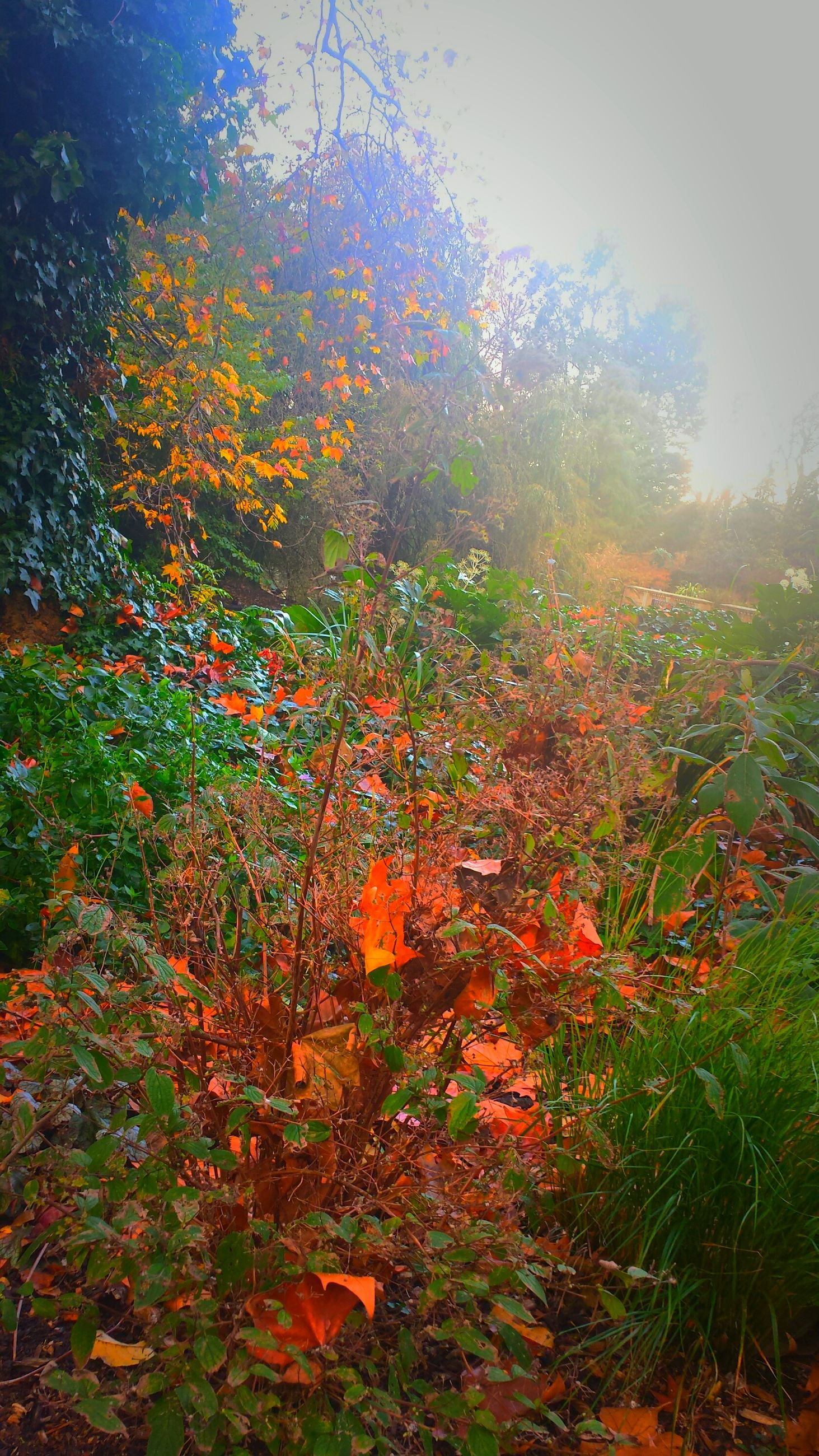 growth, tree, beauty in nature, nature, orange color, plant, autumn, sunlight, tranquility, flower, leaf, season, freshness, change, branch, field, tranquil scene, outdoors, no people, growing