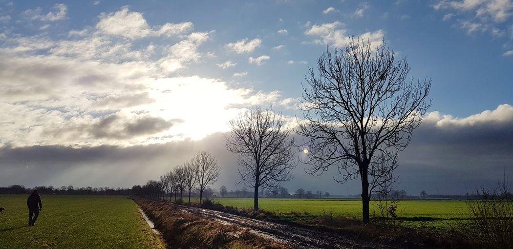 Tree Rural Scene Agriculture Field Sky Grass Cloud - Sky