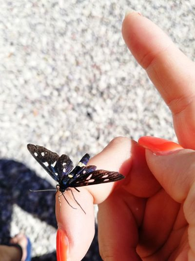 Butterfly EyeEm Nature Lover EyeEm Best Shots EyeEm Selects Water Trees Flowers, Nature And Beauty Sky And Clouds Mountain View Blue Sky Monochrome Human Hand Close-up Butterfly - Insect Animal Wing Moth Lantana Insect Symbiotic Relationship Animal Antenna Damselfly Flapping