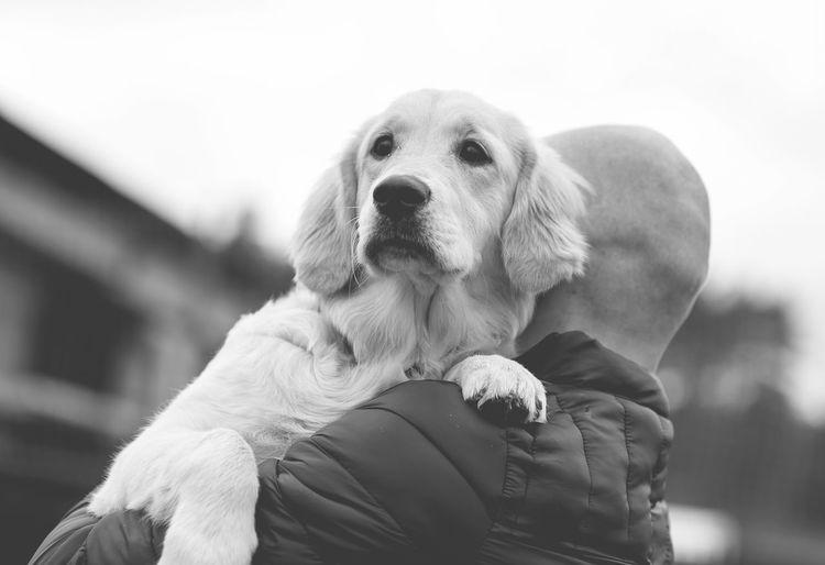 Close-Up Of Man Carrying Dog