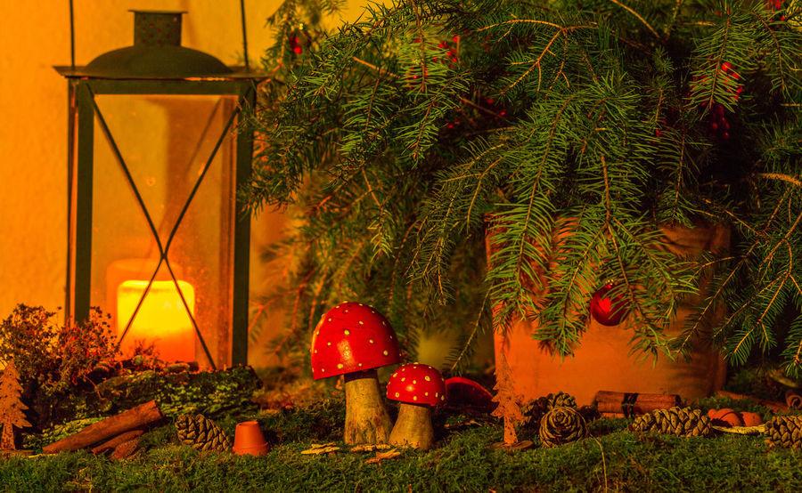 Adventszeit - Advent Time Dekoration Weihnachtsstimmung Christmas Decoration Illuminated Lantern No People Plant