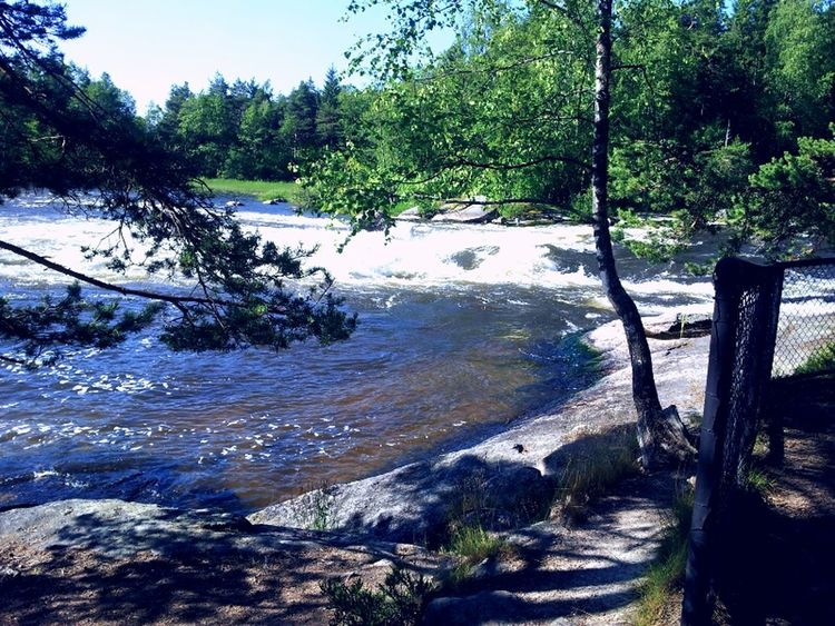 White Water River Langinkoski Dog Walking Enjoying Life For My Friend Enjoying The Sun Beautiful Nature Beatiful Place