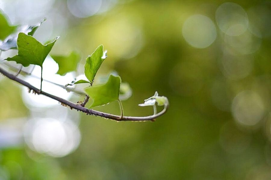 Ants 🐜 Plant Growth Green Color Nature Leaf Day No People Outdoors Focus On Foreground Beauty In Nature Close-up Fragility Flower Branch Freshness Tree Animal Themes Nature Nikon Lightroom