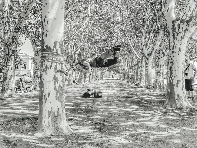 I could sit and watch this man perform all day, unbelievably talented Tree TrunkStreet Performer Street Art Tightrope Tree Tree Performance Impressive Talented Day No People Tree Nature Outdoors Growth Beauty In Nature First Eyeem Photo