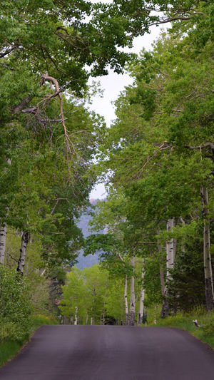 around the corner Aspen Colorado Nikonphotography Beauty In Nature Tranquility Roadtrip Tree Road Sky Grass Green Color Treelined Empty Road Countryside Winding Road Diminishing Perspective vanishing point Woods Single Lane Road Country Road Asphalt