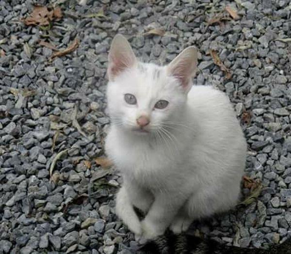 Cat♡ Iliksu