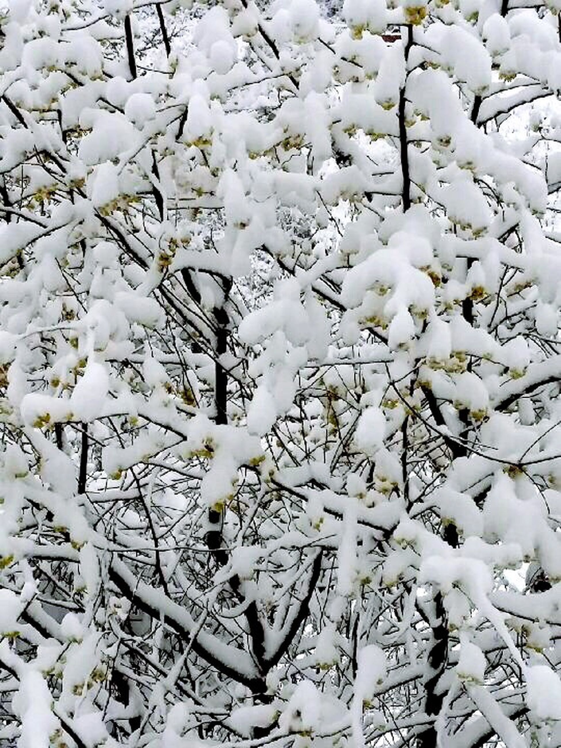 white color, season, snow, winter, high angle view, nature, cold temperature, white, flower, growth, covering, branch, beauty in nature, day, weather, fragility, tree, no people, outdoors, plant