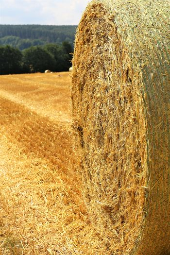 Rural Scene Hay Farm Nature Plant No People Field Landscape Agriculture Land Scenics - Nature Beauty In Nature Tranquility Crop  Bale  Day Harvesting Environment Growth Tranquil Scene Outdoors Plantation