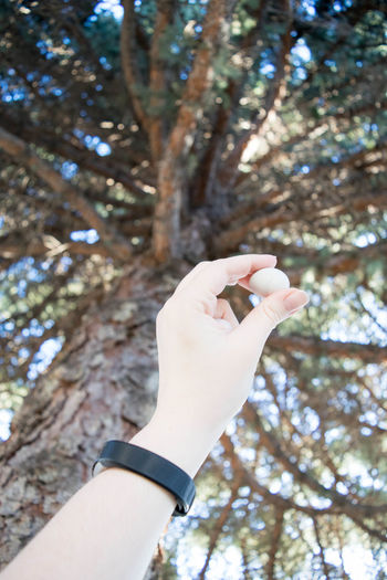 Birds Egg Growth Nature Tree Youth Body Part Branch Day Egg Finger Focus On Foreground Growth Hand Holding Human Body Part Human Finger Human Hand Human Limb Lifestyles Low Angle View Nature One Person Outdoors Personal Perspective Pineneedles Plant Real People Spring Tree Unrecognizable Person