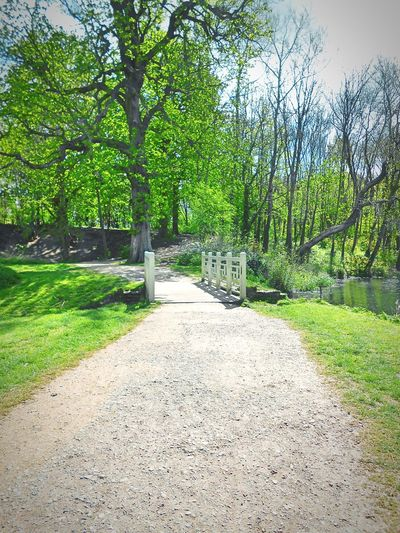 Taken by me on my Nikon S3200 yesterday. Spring Nature Bridge Trees Lake LydiardPark Swindon Wiltshire Uk Europe 2016