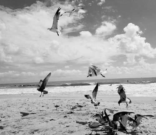 Flying Bird Beach Sea Shore Seagull Spread Wings Tranquil Scene Sand Sky Water Black&white Black And White Photography Seagulls Flying Over Me Seagull ın Flıght Seagull And Sky Seagulls And Sea Landscape_photography Blackandwhite Seagulls Live For The Story