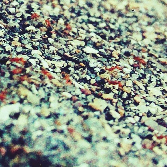 Ants Ants!! Ants On Rocks Ants Out Of Focus Antsveiw Ants At Work Ants On The Go! Ants Life Ants In Motion Ants Close Up Ants_life EyeEmNewHere The Portraitist - 2017 EyeEm Awards