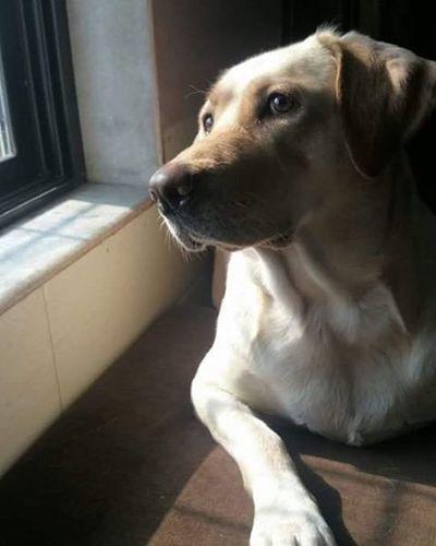Give ua ♥ to DOG 🐶.. He will neva Break 💔 it...😇 ma cheeru 😘😘😘😍