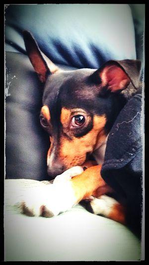 Enjoying Life Hanging Out Hello World I Love My DogCheck This Out EyeEm Best Edits EyeEm Best Shots Mydog ♥ Relaxing Ya Im Buddy Whats Good?