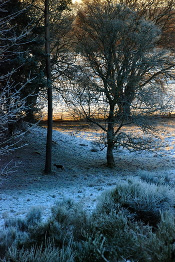 Bare Tree Beauty In Nature Branch Day Forest Grass Landscape Last Rays Of Sunlight For The Day Nature No People Outdoors Roe Deer Scenics Sky Tranquil Scene Tranquility Tree Tree Trunk Winter