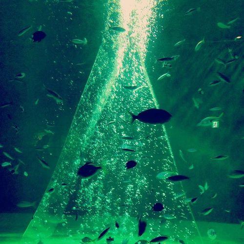 水族館 バブル 水中