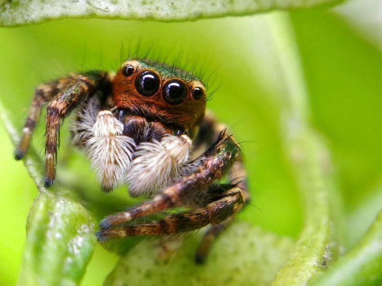 Close-up EyeEm Best Shots Eyeem Philippines Eye4photography  Spider Macro_collection Macro Photography Spider Eyes Wildlife & Nature Maximum Closeness