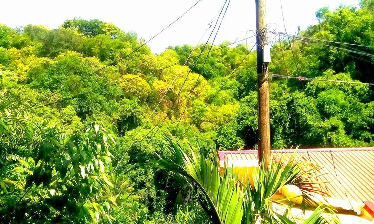 Caribbean 758 St Lucia