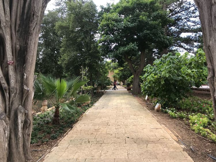 Game Of Thrones King's Landing Maltafilmtours Tree Plant The Way Forward Direction Growth Day Nature Outdoors Footpath
