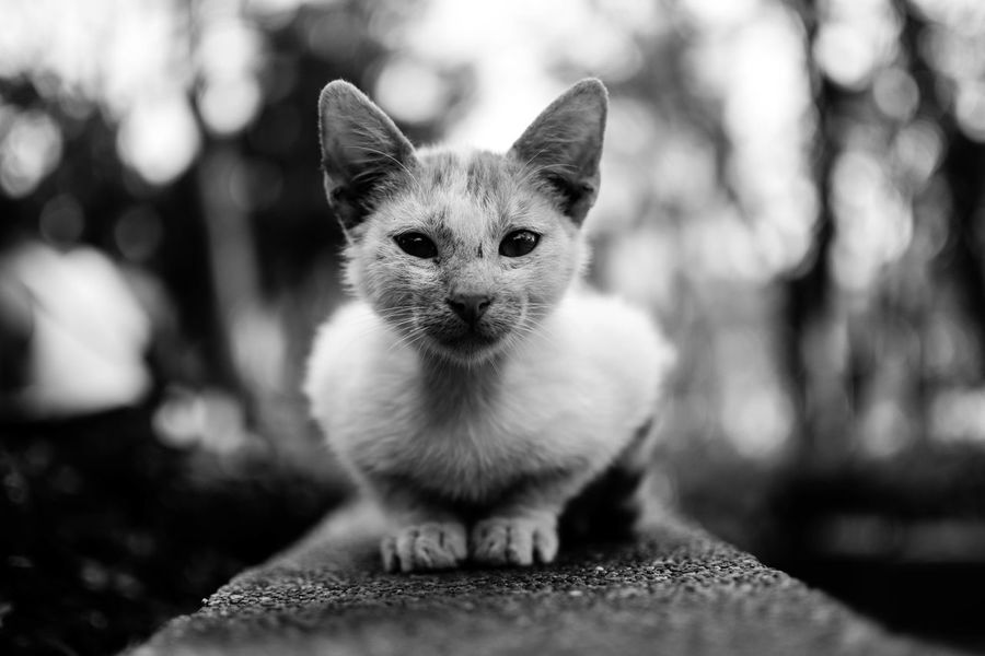 Consider life. Blakck And White Blackandwhite Bnw Bnw_collection Bnw_friday_eyeemchallenge Bnw_captures Bnw_life Bnwphotography Bnw_society Bnw_worldwide Bnw_friday_challenge Bnwmood Cat Stray Cat Stray Animal Park Bokeh Bokeh Photography Life Pets Stories From The City Visual Creativity The Street Photographer - 2018 EyeEm Awards The Portraitist - 2018 EyeEm Awards The Traveler - 2018 EyeEm Awards The Photojournalist - 2018 EyeEm Awards